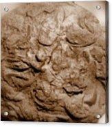 Fossil Family Acrylic Print