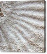 Fossil Four Acrylic Print