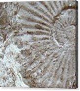 Fossil One Acrylic Print