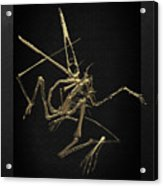 Fossil Record - Gold Pterodactyl Fossil On Black Canvas #1 Acrylic Print