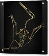 Fossil Record - Gold Pterodactyl Fossil On Black Canvas #4 Acrylic Print