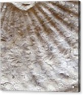 Fossil Three Acrylic Print