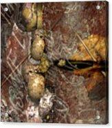 Fossils Acrylic Print