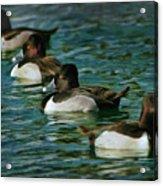 Four Ducks In A Row Acrylic Print