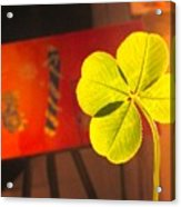 Four Leaf Clover In Studio 1 Acrylic Print