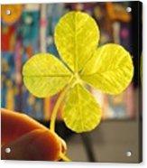 Four Leaf Clover In Studio 2 Acrylic Print