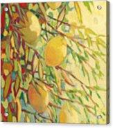 Four Lemons Acrylic Print