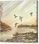 Four Mallards Over Autumn Lake Acrylic Print