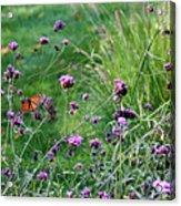 Four Monarch Butterflies Acrylic Print