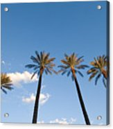 Four Palm Trees Acrylic Print