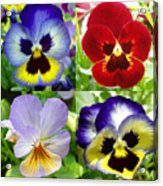 Four Pansies Acrylic Print