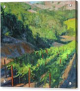 Four Rows Napa Valley Acrylic Print by Anna Rose Bain