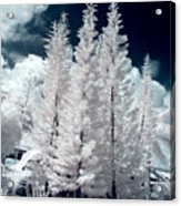 Four Tropical Pines Infrared Acrylic Print