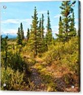 Four Wheeler Trail - Richardson Highway Acrylic Print