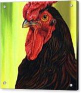 Fowl Emperor Acrylic Print