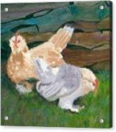 Fowl Play Acrylic Print