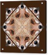 Fox Close Up Acrylic Print