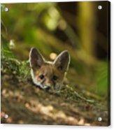 Fox Hole Acrylic Print
