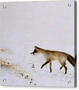 Fox In Snow Acrylic Print