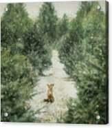 Fox In The Flurries Acrylic Print