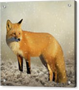 Fox In The Snowstorm - Painting Acrylic Print