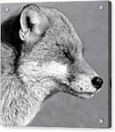 Fox - Mono Acrylic Print
