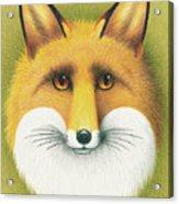 Fox Portrait Acrylic Print