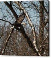 Fox River Eagles - 20 Acrylic Print