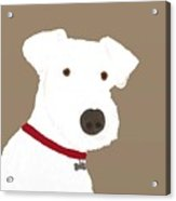 Fox Terrier Acrylic Print