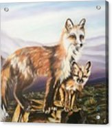 Foxes   Fundamental Foresight Foundation  Acrylic Print