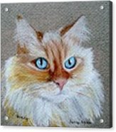 Foxey Acrylic Print