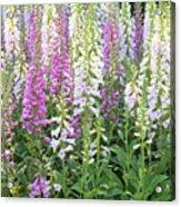 Foxglove Garden - Vertical Acrylic Print