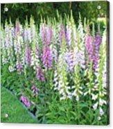 Foxglove Garden Acrylic Print