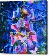 Foxgloves Acrylic Print