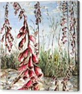 Foxgloves Acrylic Print