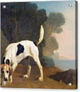 Foxhound On The Scent Acrylic Print by George Stubbs