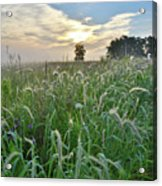 Foxtail Grasses In Glacial Park Acrylic Print