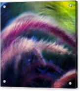 Foxtails In Shadows Acrylic Print