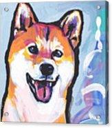 Foxy Shiba Acrylic Print