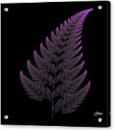 Fractal Fern Acrylic Print