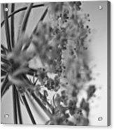 Fractal Flower Photoset 03 Acrylic Print