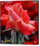 Fragmented Pink Rose Acrylic Print