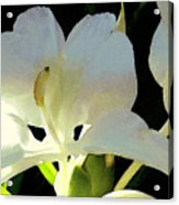 Fragrant White Ginger Acrylic Print