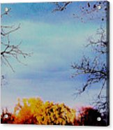 Framed Fall Trees Acrylic Print