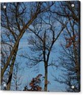 Framed In Oak - 1 Acrylic Print