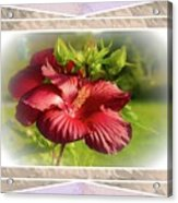 Framed Red Hibiscus Acrylic Print