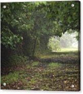 Framed Summer Woods Acrylic Print