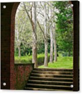Framed Sycamores Acrylic Print by Susan Isakson