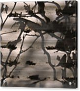 France, Paris, Tree Branches Reflected Acrylic Print