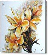 Frangipangi   Sold Acrylic Print